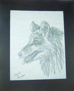Gray Wolf-